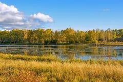 Lago Sun y abedul blanco en el otoño Imágenes de archivo libres de regalías