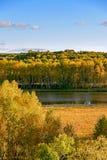 Lago Sun y abedul blanco en el otoño Foto de archivo