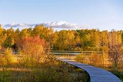 Lago Sun y abedul blanco en el otoño Imagen de archivo