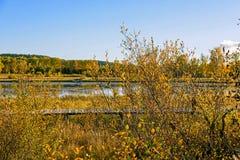Lago Sun y abedul blanco en el otoño Fotografía de archivo