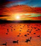 Lago sunset con gli uccelli acquatici Fotografie Stock Libere da Diritti