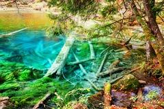 Lago surpreendente dos azuis celestes com os troncos de árvore submersos entre madeiras da queda Foto de Stock Royalty Free