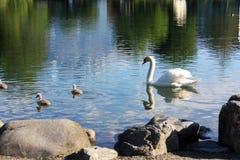 Lago in Svizzera fotografia stock