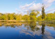 Lago swamp e floresta verde imagem de stock royalty free