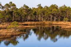 Lago swamp en verano Fotos de archivo