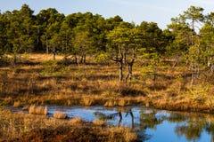 Lago swamp en verano Fotografía de archivo libre de regalías
