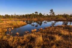 Lago swamp en verano Imagenes de archivo