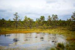 Lago swamp na floresta fotos de stock royalty free