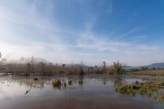 Lago swamp na manhã imagens de stock royalty free