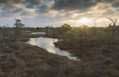 Lago swamp no nascer do sol foto de stock royalty free