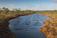 Lago swamp no nascer do sol imagem de stock royalty free