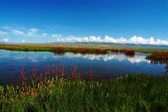 Lago swan Immagine Stock
