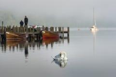 Lago swan Foto de archivo