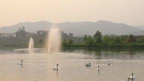 Lago swan metrajes