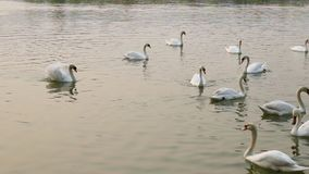 Lago swan filme