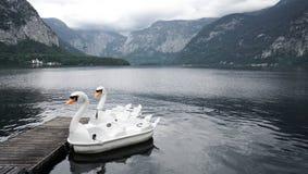 Lago swan di Hallstatt Austria 9 immagini stock libere da diritti