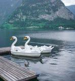 Lago swan di Hallstatt Austria 8 fotografie stock