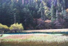 Lago swan di Jiuzhaigou Fotografia Stock