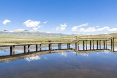 Lago swan en los prados de Bayanbulak en Xinjiang fotos de archivo libres de regalías
