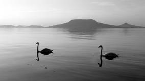 Lago swan y volcán viejo Fotos de archivo libres de regalías