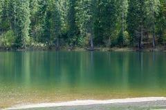Lago Synevir mountain com árvores coníferas Fotografia de Stock