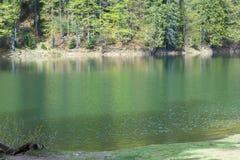 Lago Synevir mountain com árvores coníferas Fotos de Stock Royalty Free