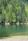 Lago Synevir mountain com árvores coníferas Fotografia de Stock Royalty Free