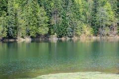Lago Synevir mountain com árvores coníferas Fotos de Stock