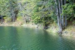 Lago Synevir mountain com árvores coníferas Imagem de Stock