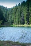Lago Synevir mountain com árvores coníferas e céu Fotografia de Stock Royalty Free