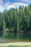 Lago Synevir mountain com árvores coníferas e o céu nebuloso Imagens de Stock