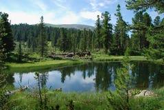 Lago in taiga Immagini Stock Libere da Diritti