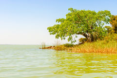 Lago Tana em Etiópia Imagem de Stock