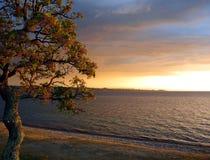 Lago Taupo na noite Sun, Nova Zelândia Fotos de Stock