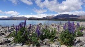 Lago Tekapo con i lupini, Nuova Zelanda Fotografie Stock