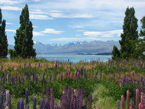Lago Tekapo, Nova Zelândia fotos de stock royalty free