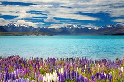 Lago Tekapo, Nueva Zelandia fotografía de archivo