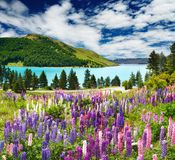 Lago Tekapo, Nuova Zelanda Immagine Stock