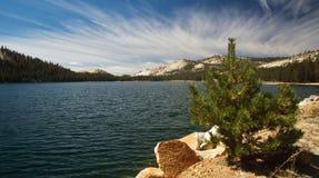 Lago Tenaya Fotografia Stock