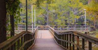 Lago Texas Caddo na queda fotografia de stock royalty free