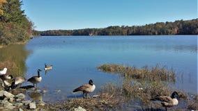 Lago Thom-A-Lex Fotografie Stock