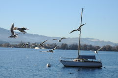 Lago Thun con la nave ed i gabbiani immagine stock