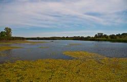 Lago Tisza, Hungria Imagem de Stock Royalty Free