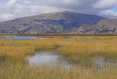 Lago Titicaca. Imagem de Stock Royalty Free