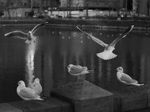 Lago a Tokyo Giappone con gli uccelli di fauna immagini stock