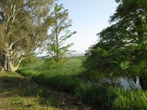 Lago Tonga, Argélia fotografia de stock royalty free