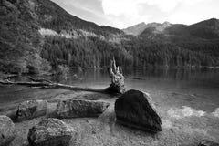 Lago Tovel, Fotografie Stock
