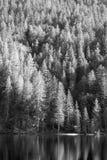 Lago Tovel, Fotografia Stock Libera da Diritti