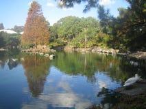 Lago tranquillo ai giardini Sydney del giapponese Immagine Stock Libera da Diritti