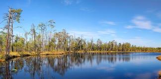 Lago tranquillo forests ed alberi sempreverdi Immagine Stock